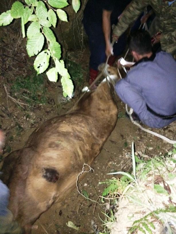 Uçurumdan yuvarlanan ineği AFAD kurtardı