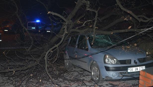 Üç öğrencinin bulunduğu otomobillerin üzerine ağaç devrildi
