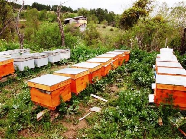 Zonguldak Orman Bölge Müdürlüğü Bal Üretim Ormanı sayısını 8 'e çıkarttı.