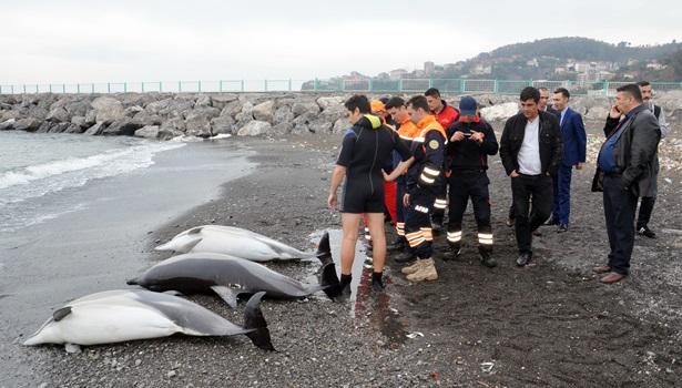 Yunus balıkları karaya vurdu