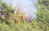 Karabük'te orman yangını!..