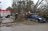 Devrilen ağaçtan kıl payı kurtuldular!..