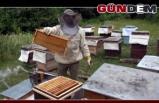 Balları çaldılar, arıları telef ettiler!..
