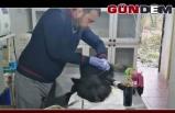 Ölüme terk edilen köpek ameliyat oldu