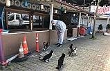 Ereğli'de sokak hayvanları unutulmadı