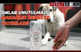 Son dakika: İçişleri Bakanlığı'ndan sokak hayvanları için genelge