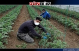 Tarımda üretim artırılacak...