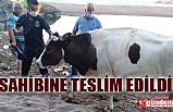 BATAKLIKTAN ÇIKARILDI, SAHİBİNE TESLİM EDİLDİ
