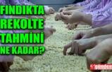FINDIKTA TAHMİNİ REKOLTE  AÇIKLANDI