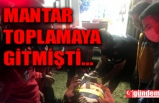 MANTAR TOPLAMAYA GİTMİŞTİ, UÇURUMA YUVARLANDI