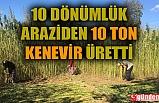 10 DÖNÜMLÜK ARAZİSİNE KENEVİR EKTİ, 10 TON ÜRETTİ