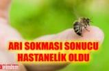 ARI SOKTU, BAYGINLIK GEÇİRDİ, HASTANEYE KALDIRILDI