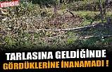 TARLASINA GELDİĞİNDE GÖRDÜKLERİNE İNANAMADI !