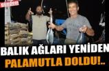 BALIK AĞLARI YENİDEN PALAMUTLA DOLDU!..