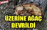 ÜZERİNE AĞAÇ DEVRİLDİ