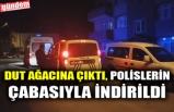 DUT AĞACINA ÇIKTI, POLİSLERİN ÇABASIYLA İNDİRİLDİ