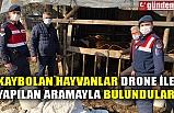 KAYBOLAN HAYVANLAR DRONE İLE YAPILAN ARAMAYLA BULUNDULAR