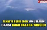 TEKNEYE EŞLİK EDEN YUNUSLARIN DANSI KAMERALARA YANSIDI