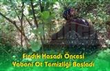 Fındık Hasadı Öncesi Üreticiler Fındık Bahçelerinde Hazırlıklara Başladı.