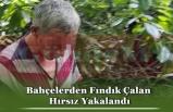 Bahçelerden Fındık Çalan Hırsız Yakalandı
