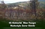 Karabük'te Çıkan Orman Yangını Tamamen Kontrol Altına Alındı