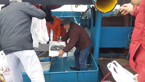 Balıkçılar istavritin torbasını 5 TL'den sattı