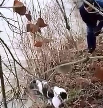 Günlerce boynuna geçen bidonla dolaşan köpeği itfaiye kurtardı