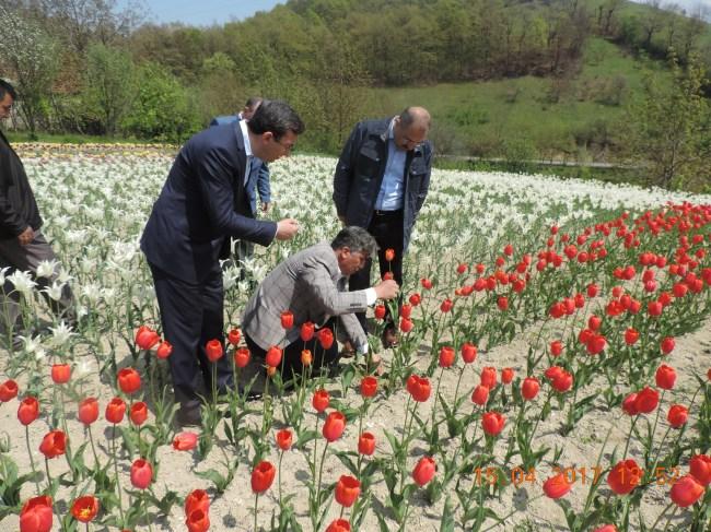 Vali, Lale soğanı tesisini inceledi... 'Üretim artsın' dedi