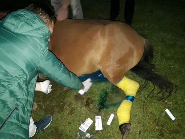 Hamile Yılkı Atı ölmekten son anda kurtarıldı