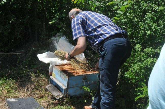 Arılara kek veriliyor