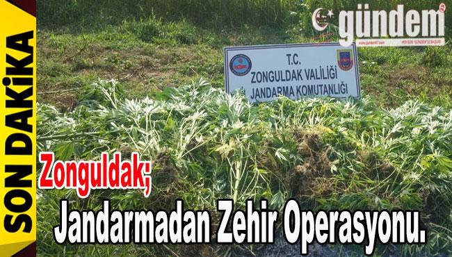 Jandarmadan Zehir Operasyonu..