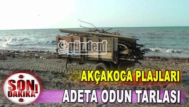 Akçakoca Plajları Adeta Odun Tarlası