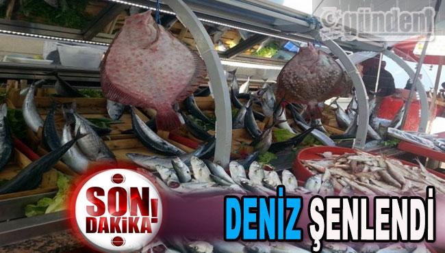 DENİZ ŞENLENDİ