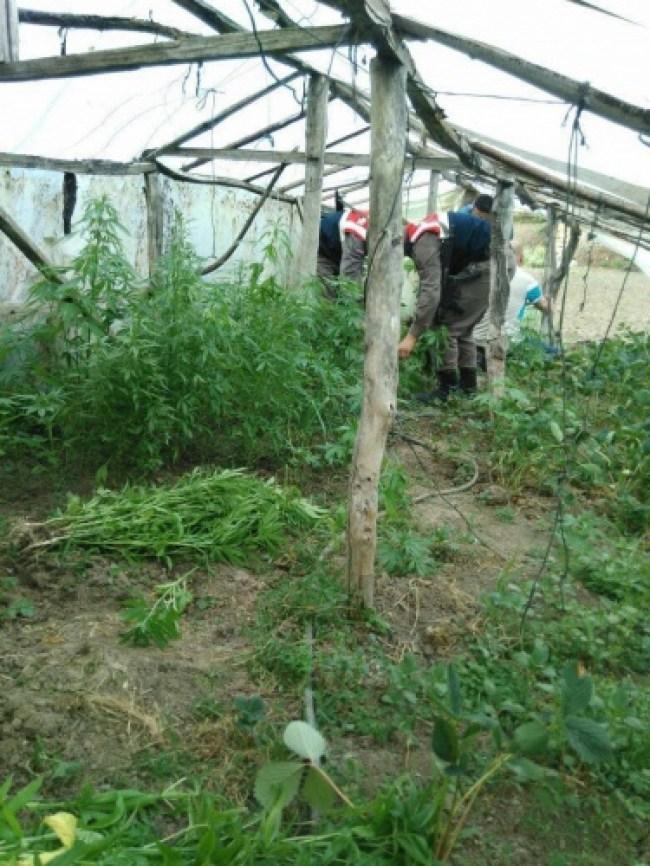 Bartın'da Zehir Taciri operasyonu 1 Gözaltı