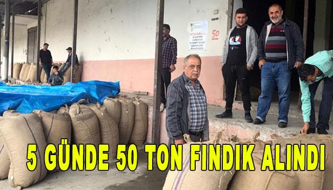 5 günde 50 ton fındık alındı