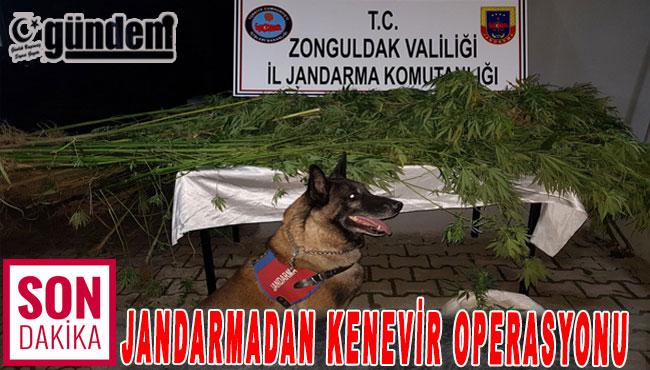 JANDARMADAN KENEVİR OPERASYONU