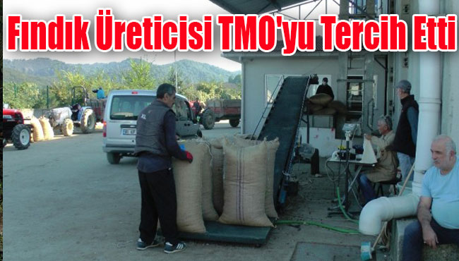Fındık Üreticisi TMO'yu Tercih Etti