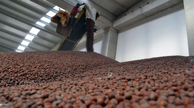 TMO 60 bin ton fındık aldı