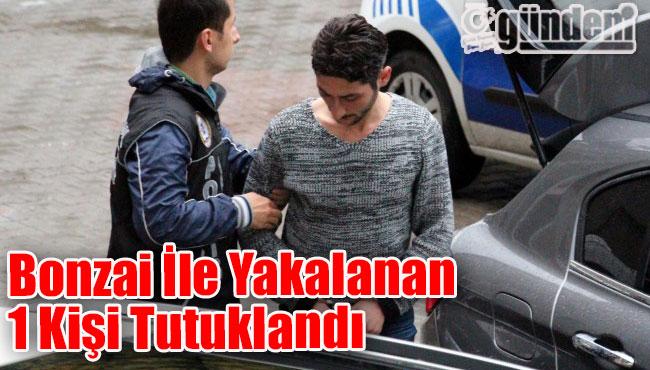 Zonguldak'ta Bonzai İle Yakalanan 1 Kişi Tutuklandı