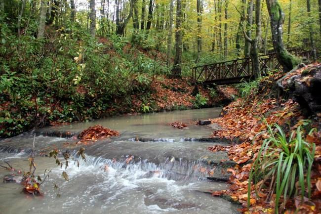 Zonguldak Kent Ormanı'nda sonbahar güzelliği