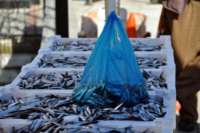 Balık Bollaştı Hamsi Ucuzladı