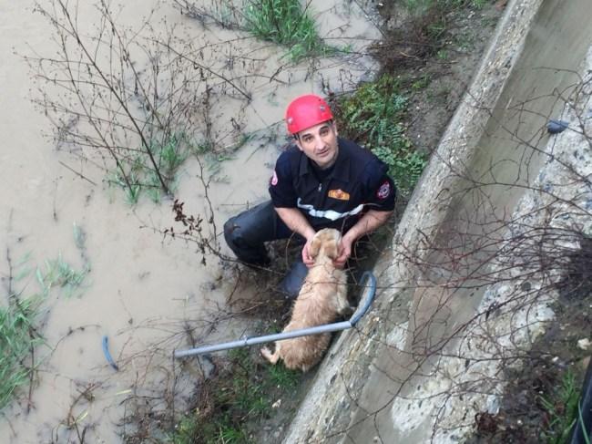 Dereye düşen köpeği itfaiye ekipleri kurtardı...