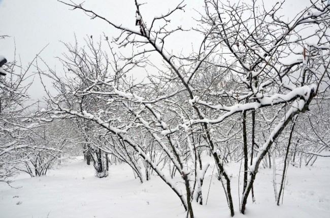 Fındığı önce don vurdu, şimdi de kar...