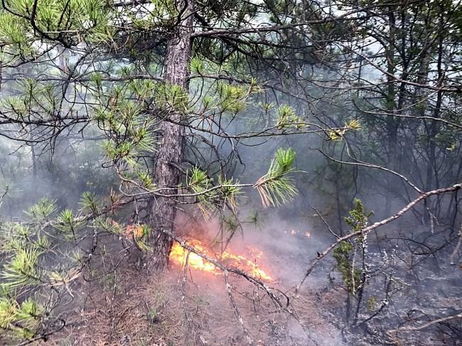 10 ayrı noktada çıkan orman yangını söndürüldü