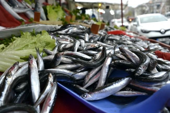 Balıkçılar, Hamsinin Ucuzlaması İçin Kar Yağmasını Bekliyor..
