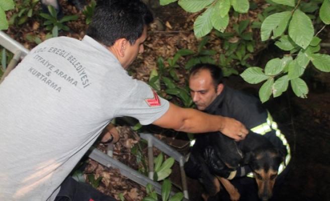 İtfaiye ekibi kilometrelerce yürüyüp kuyuya düşen köpeği kurtardı