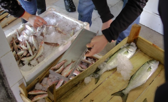 75 kilogram balığa el konuldu