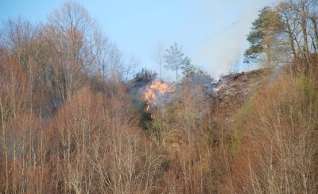 Alaplı´da 5 hektar ormanlık alan yandı