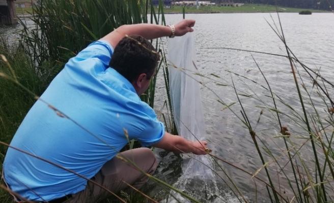 Düzce'de göllere 29 bin 500 balık bırakıldı
