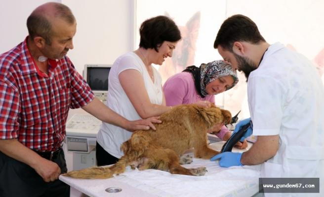 Yaralı köpek için büyük uğraş verdiler